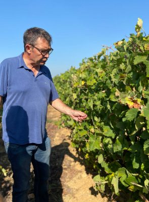 Vendanges Domaine Givaudan Vin Grellier